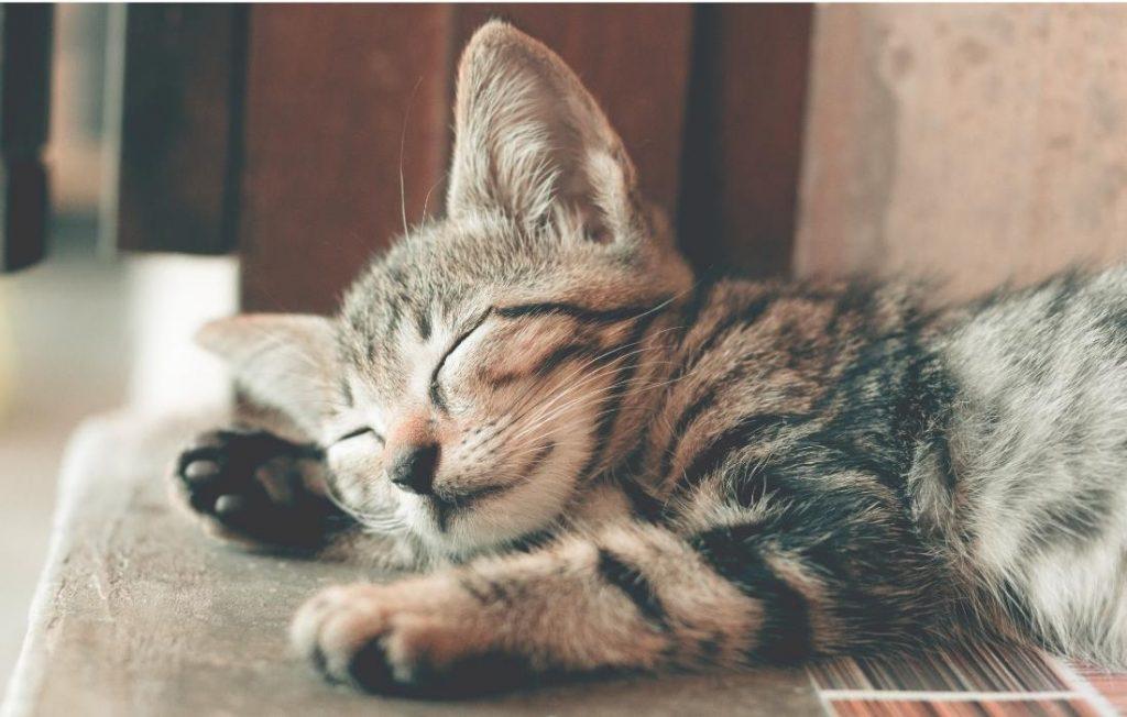 ύπνος μέχρι να πονέσουν τα κόκαλα