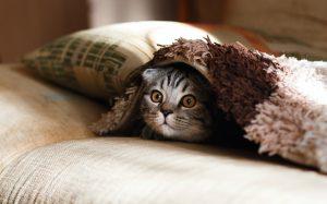 λόγος για unfollow cutie cat